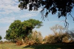 botswana1022