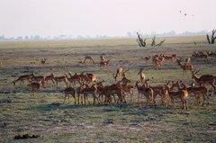 botswana1059