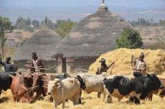 ethiopia0521