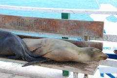 galapagos-islands1003