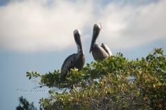 galapagos-islands1006