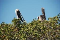 galapagos-islands1007