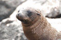 galapagos-islands2004