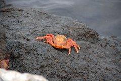 galapagos-islands2005