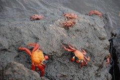 galapagos-islands2006