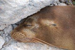 galapagos-islands2011