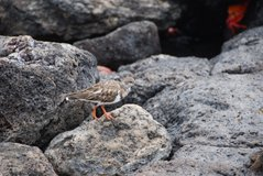 galapagos-islands2013