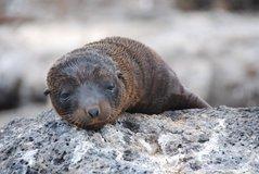 galapagos-islands2014