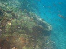 galapagos-islands7282