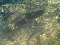galapagos-islands7288