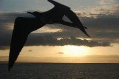 galapagos-islands7524