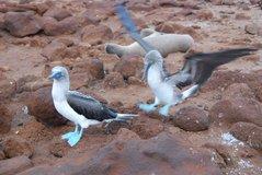 galapagos-islands8001