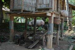 laos1064