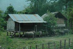 laos5017