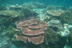 indonesia8140