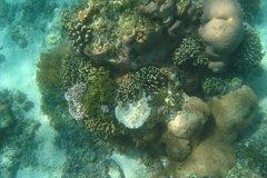 indonesia8145