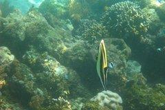indonesia8149