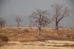 malawi2115