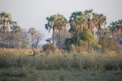 malawi2116