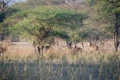 malawi2134