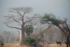 malawi2136