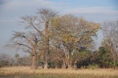 malawi2139