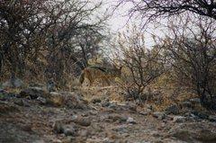 namibia1230
