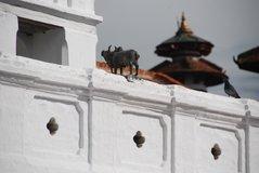 nepal1046