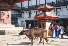 nepal1047