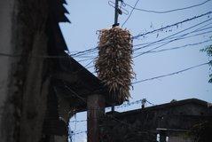nepal7021