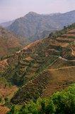 nepal9321