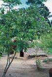 surinam1059