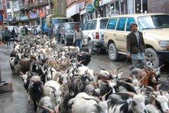 tibet1006