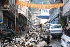 tibet1010