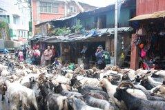 tibet1011