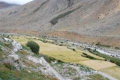 tibet1050