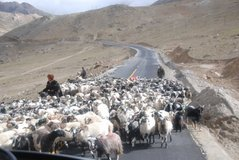tibet1059