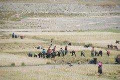 tibet1131