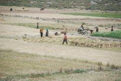 tibet1132