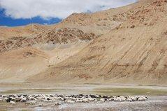 tibet1138