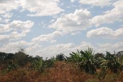 zambia5018