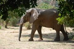 zambia5026